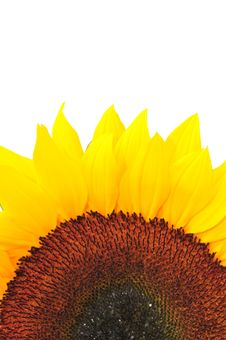 Free SunFlower Studio Series 25 Royalty Free Stock Photography - 5076667