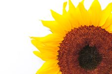 Free SunFlower Studio Series 26 Stock Photo - 5076670
