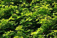 Free Abundance Of Leaves Royalty Free Stock Image - 5077416