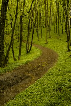 Free Forest Path Stock Image - 5077501