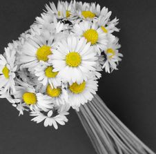 Free Daisy Flowers Bouquet Stock Image - 5078321