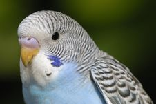 Free Parrot Stock Image - 5078431