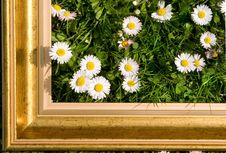 Free Daisies In Gold Frame Royalty Free Stock Photos - 5079608