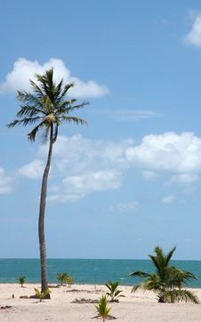 Free Beach Mexico Stock Image - 5080321