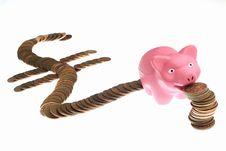 Free Money Pig Stock Photo - 5080490