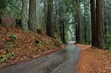 Free Road Through The Redwoods Stock Image - 5081121