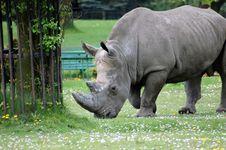 Free Rhinoceros Royalty Free Stock Image - 5082006