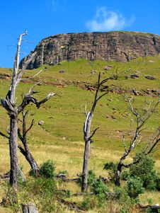 Dry Trees Royalty Free Stock Images