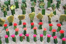 Free The Files Of Cacti Plants Stock Photo - 5083400