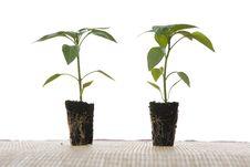 Free Small Plants Royalty Free Stock Photos - 5084258