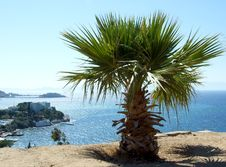 Free Palma Overlooking The Sea Stock Photo - 5085200