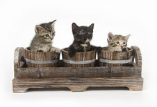 Free Three Kittens In Flower Pots Stock Image - 5085571