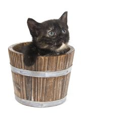Kitten In A Flower Pot Stock Photography