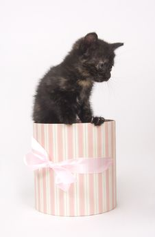 Kitten In A Gift Box Royalty Free Stock Photo