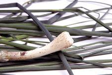 Free Fresh Scallion And Stalks Stock Image - 5085601