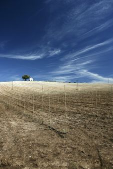 Free Hilltop Vineyard In Hot Summer Day With Deep Blue Royalty Free Stock Photography - 5085627