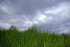 Free Grass And Cloudy Sky Stock Photo - 5087130