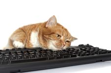 Red Cat Lays On The Keyboard Stock Images