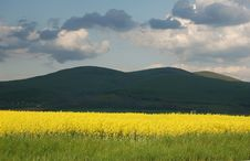 Free Yellow Fields Stock Photo - 5087990
