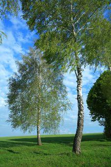 Free Two Birches Stock Photos - 5088763