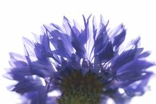 Free Blue Flower Stock Photo - 5089050