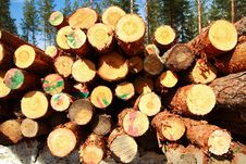 Free Cut Logs At The Edge Of The Forest Stock Image - 5089391