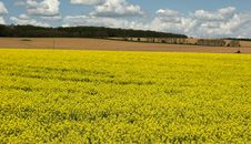 Free Oil Rape Fields Royalty Free Stock Image - 5089496