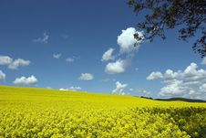 Free Oil Rape Fields Royalty Free Stock Photo - 5089595