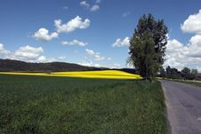 Free Road In Midle Of Oil Rape Fields Stock Images - 5089614