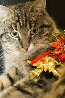 Cat With Christmas Tree Toy Stock Photo