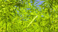 Free Bamboo Leave Royalty Free Stock Images - 5091389
