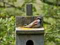 Free Brown Bird On Birdhouse Royalty Free Stock Images - 5091409