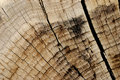 Free Wooden Texture Royalty Free Stock Photos - 5095788
