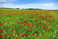 Free Poppies  In Colored Field. Royalty Free Stock Photo - 5096145