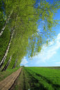 Free Road In A Field Stock Photo - 5098640