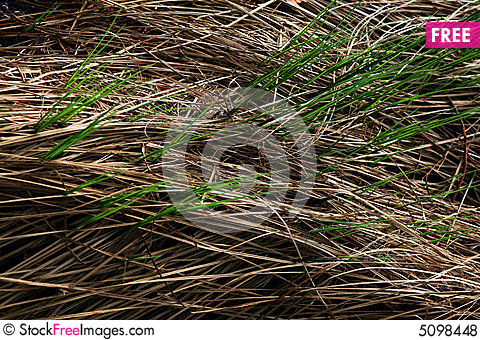 Free Grey Grass And Green Grass Royalty Free Stock Photos - 5098448