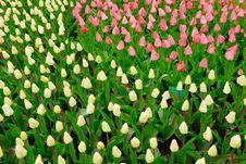 Free Flower Garden Royalty Free Stock Image - 5090046