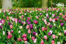 Free Flower Garden Stock Image - 5090191