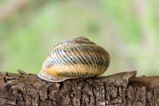 Free Spiral Bowl Of A Snail Royalty Free Stock Photography - 5090267