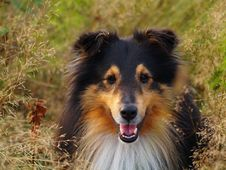 Free Sweet Dog In The Grass Stock Photo - 5090300