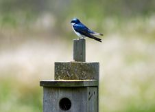 Free Bluebird On Birdhouse Royalty Free Stock Images - 5091349