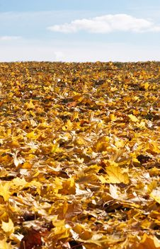 Yellow Leaves Under The Sky Royalty Free Stock Photos