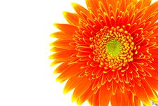 Free Gerbera Flower Royalty Free Stock Photography - 5094697