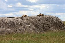 Free Lions On Kopje In Serengeti Royalty Free Stock Photography - 5094727