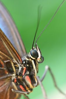 Free Macro Of Butterfly Royalty Free Stock Images - 5095699