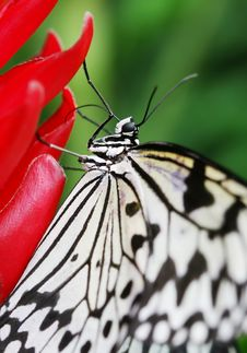 Butterfly On The Prime Royalty Free Stock Photography