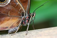 Free Fat Butterfly Royalty Free Stock Image - 5095806