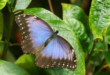Free Butterfly In Tropic Stock Images - 5095814
