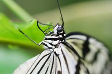 Free Black And White Butterfly Royalty Free Stock Photos - 5095818