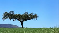 Free Solitary Tree , Stock Photography - 5096052